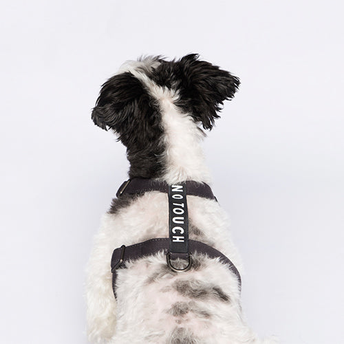 Label Harness | Charcoal