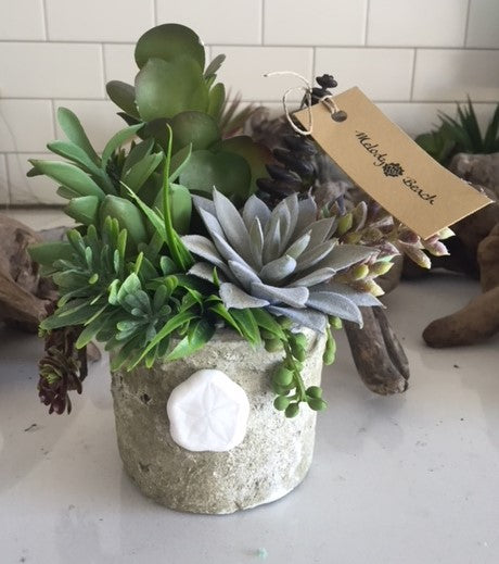 Artificial Succulent Pot with Sand Dollar