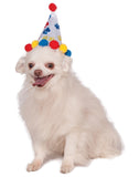 Boy Paw Print Pet Birthday Hat