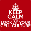 """Keep Calm and Look at Your Cell Culture"" (white) - Men's T-Shirt - T-Shirt - ScienceT-Shirts"