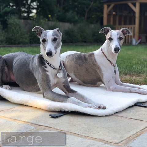 dogs on a travel bed