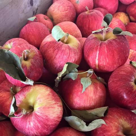 red apples organic fruits and vegetables brisbane
