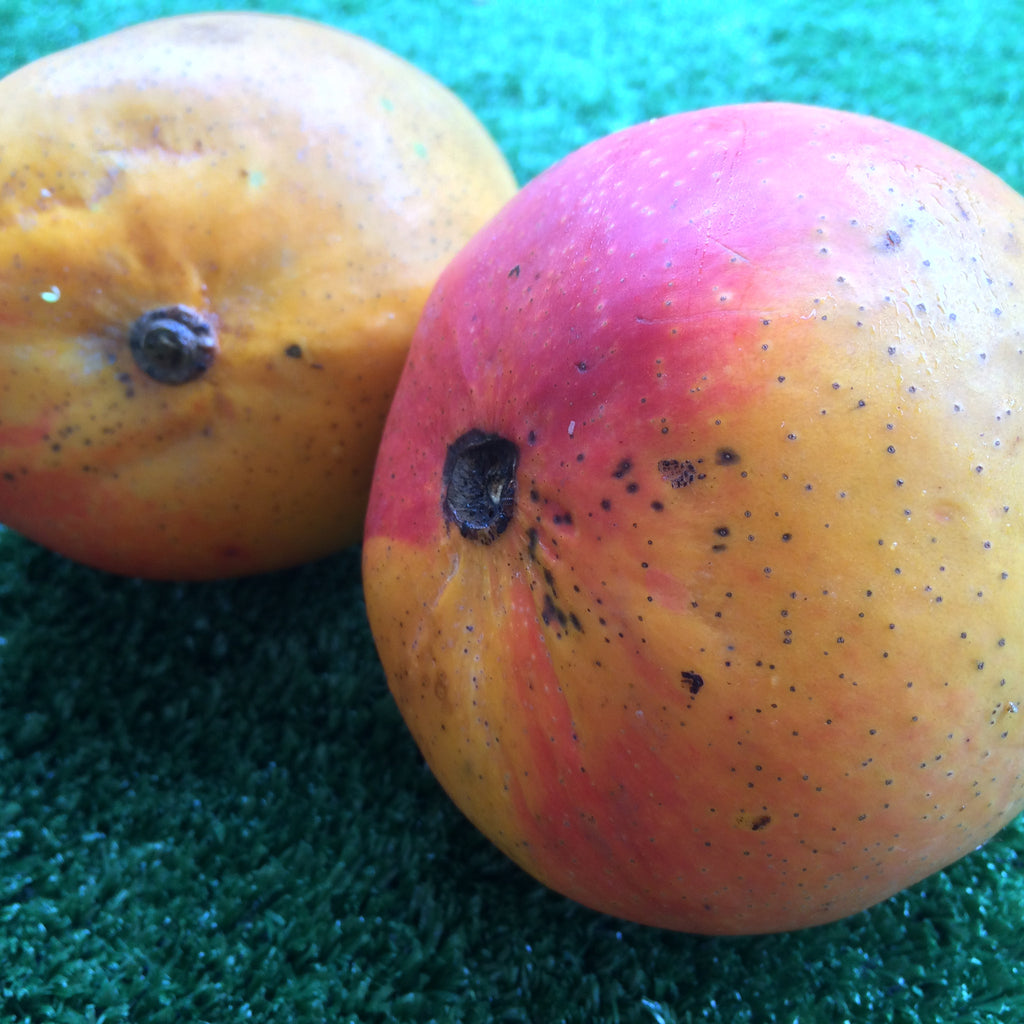 Mangoes - Kensington Pride - Small (each)