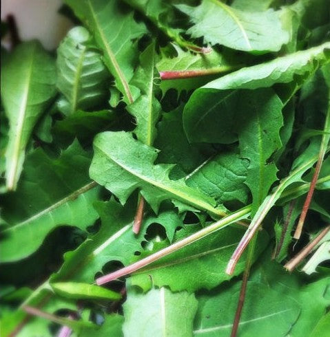 Dandelion Greens (bunch)