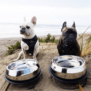 Two pugs looking straight ahead instead of their enhanced pet bowl