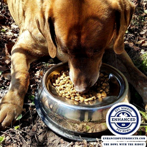 Labrador eating from enhanced pet bowl with logo on the bottom right corner