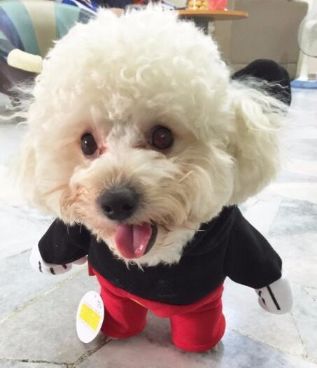 Cute Pet Outfit