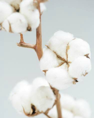 Get To Know: Cotton
