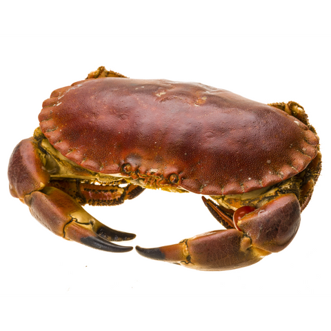 Fresh Brown Edible Crab (2 pieces per portion) - Brittany, France