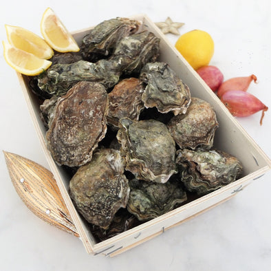 PRE-ORDER FOR 24.09 - Wild Natural Oysters - Cupped from Marennes, France - 24 pieces