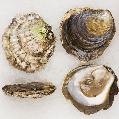 PRE-ORDER FOR 24.09 - Belon Oysters n°2 - Flat from Brittany, France - 24 pieces