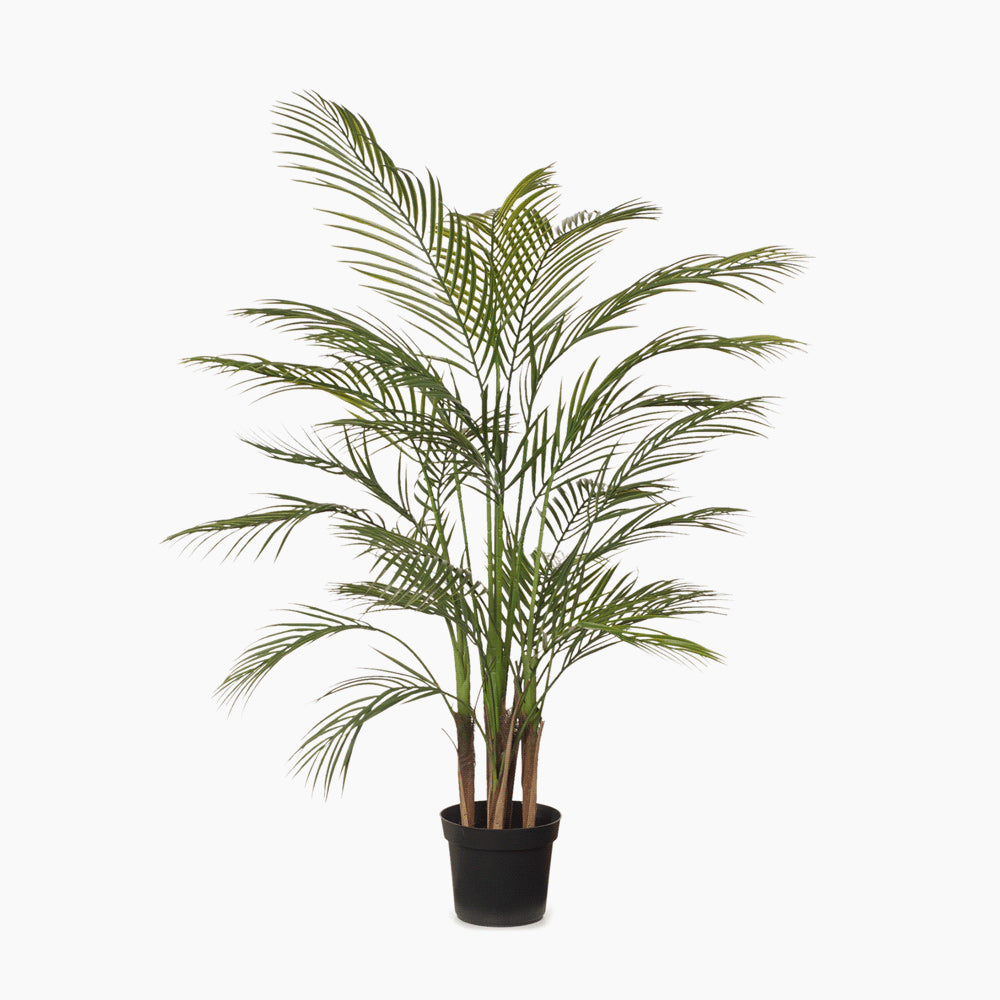 Palm Areca Green (Medium)