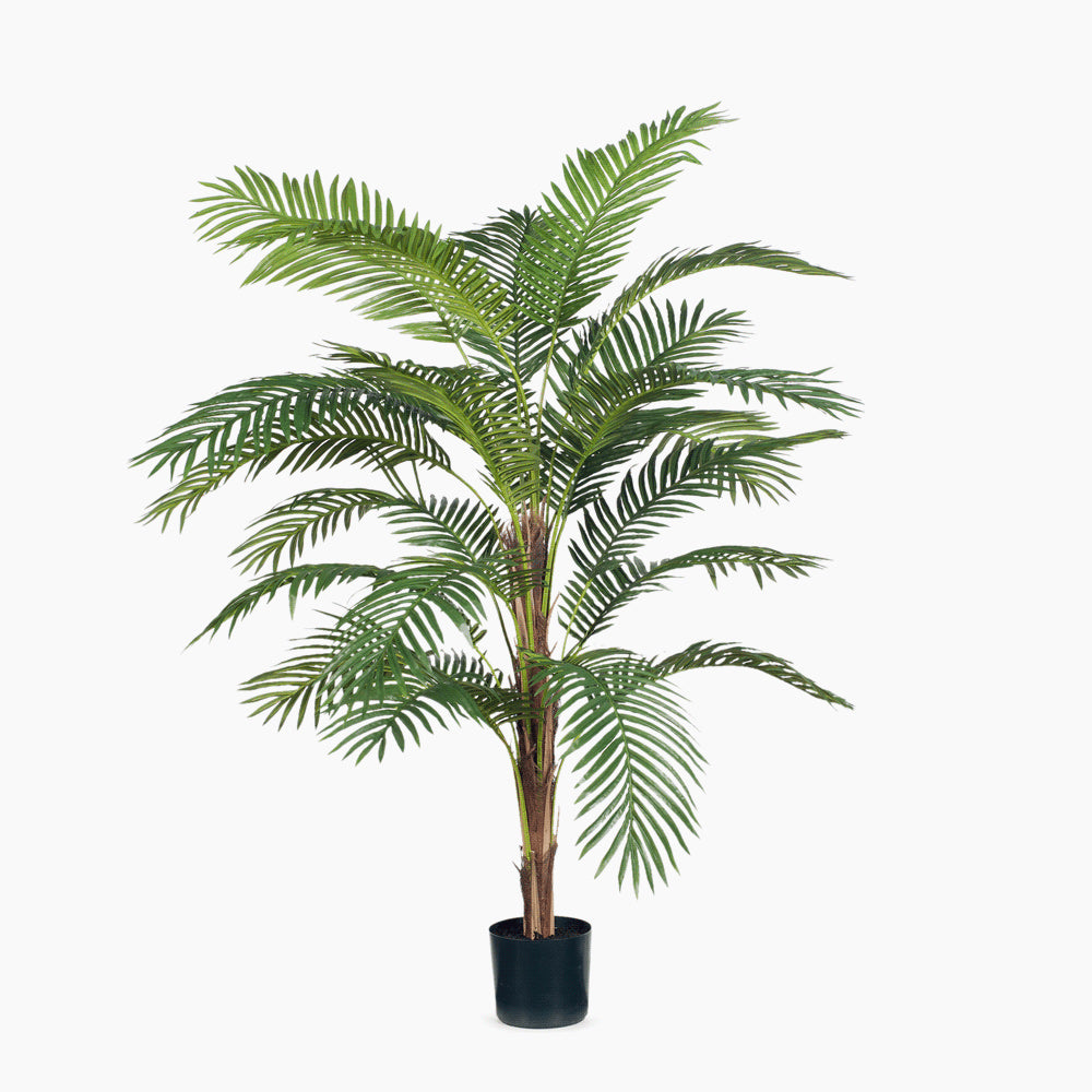 Palm Kentia Green (Medium)