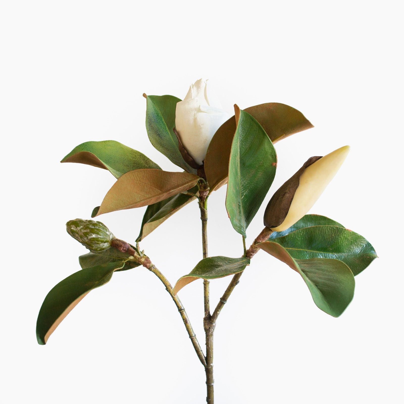 Artificial magnolia bud, with three different stages of magnolia bud on one stem
