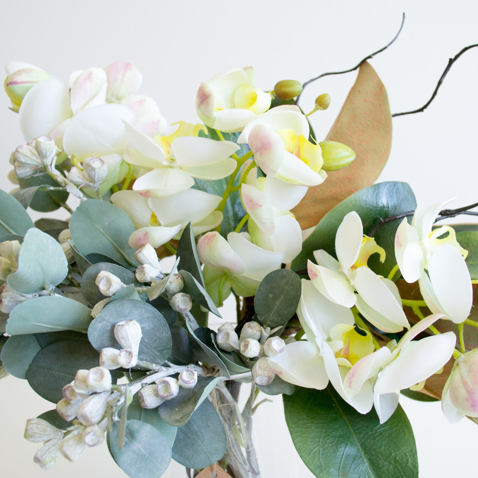 White phalaenopsis orchid and tetragona