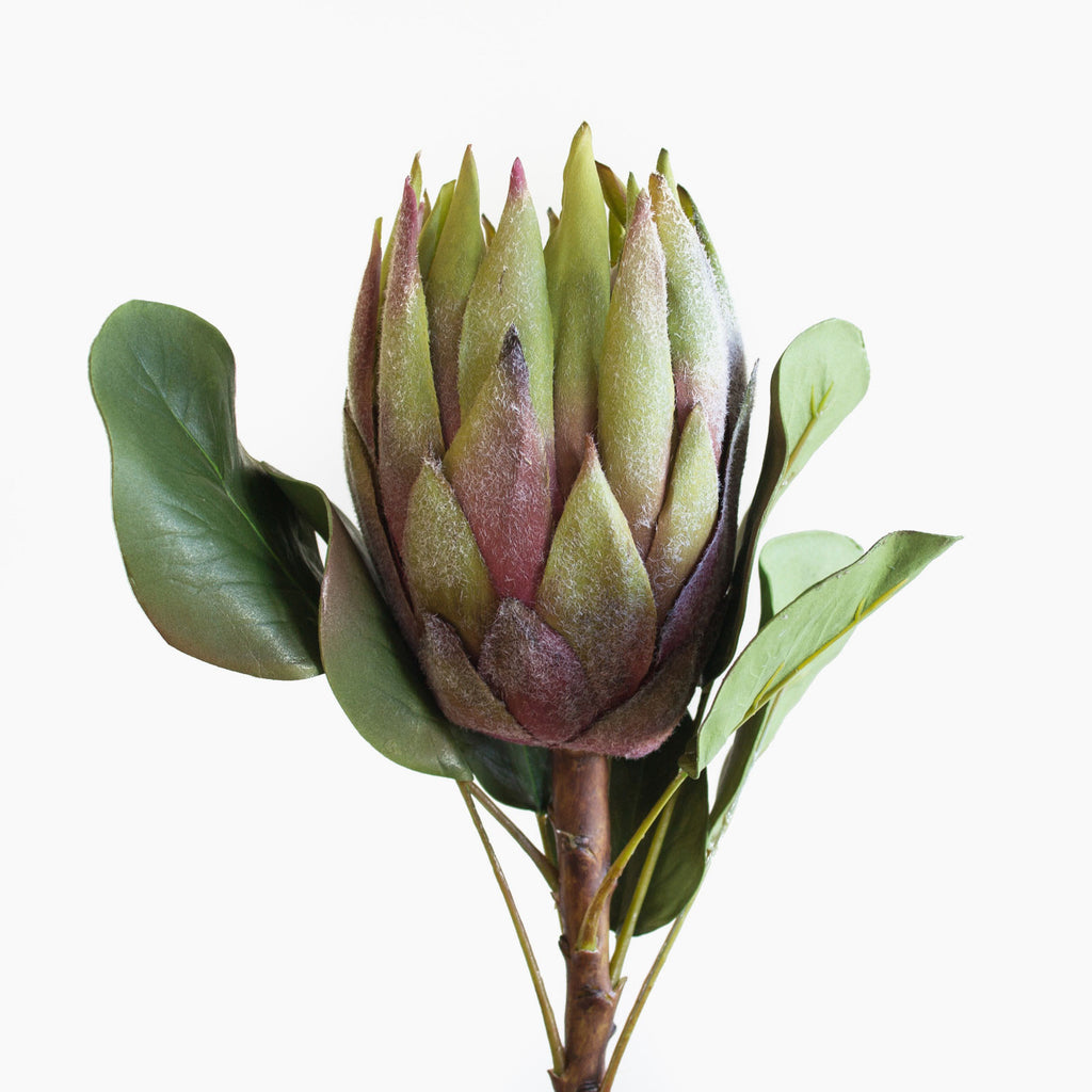 Botanically correct, artificial green king protea with burgundy/dusty pink accents