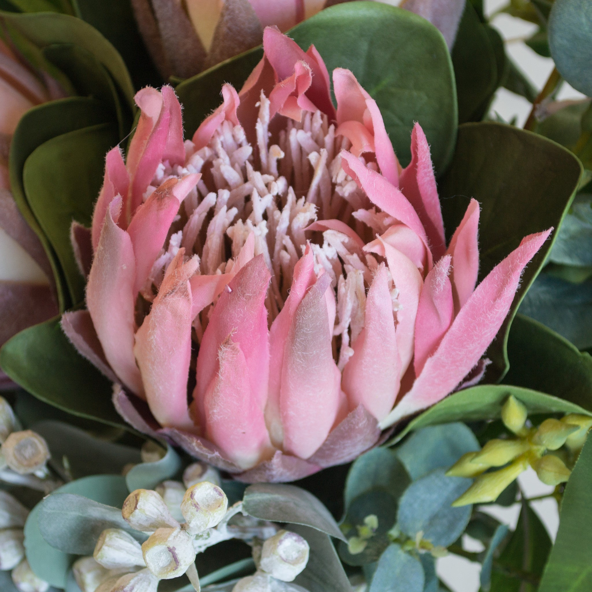 Pink protea, eucalyptus and tetra nuts