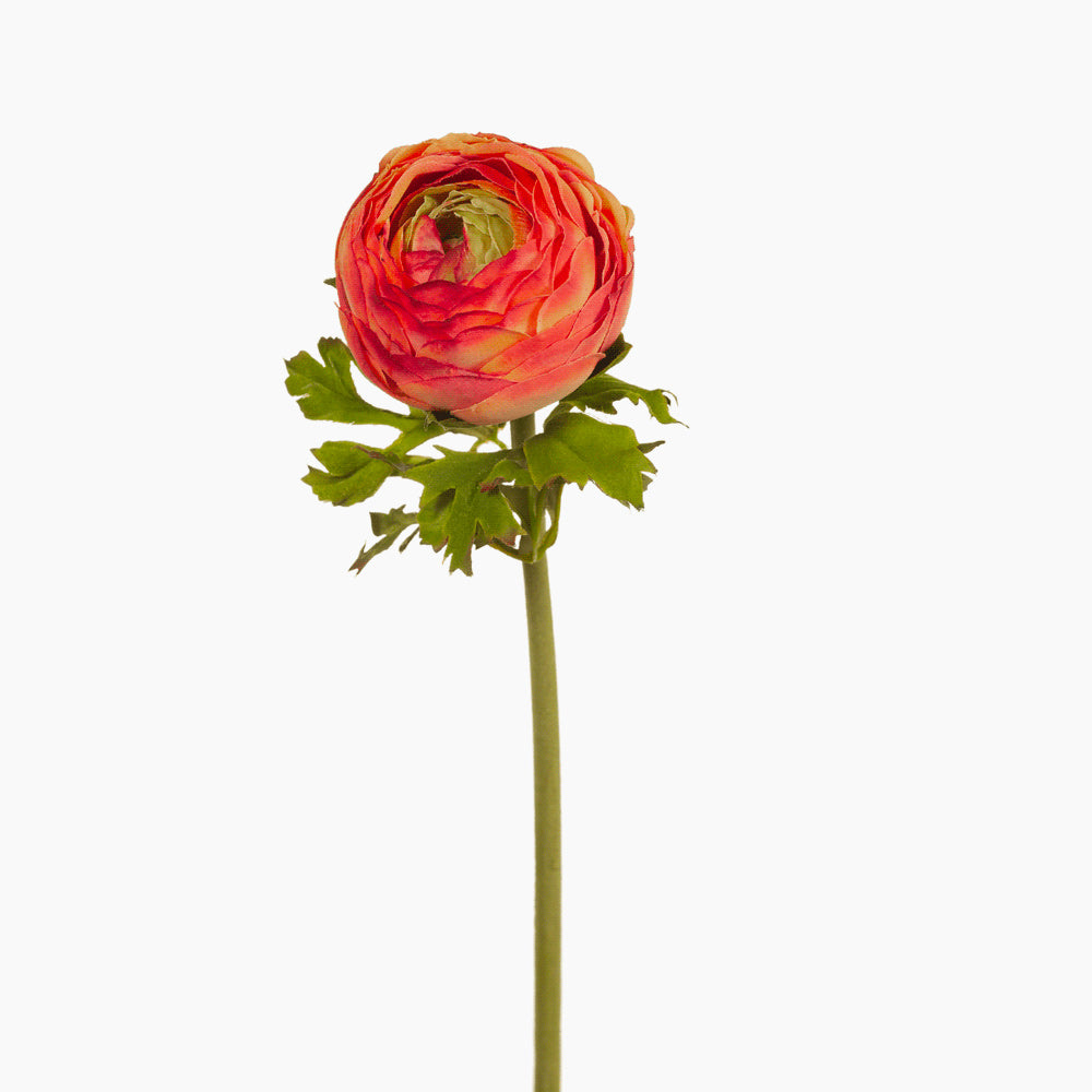 Ranunculus (burnt orange)