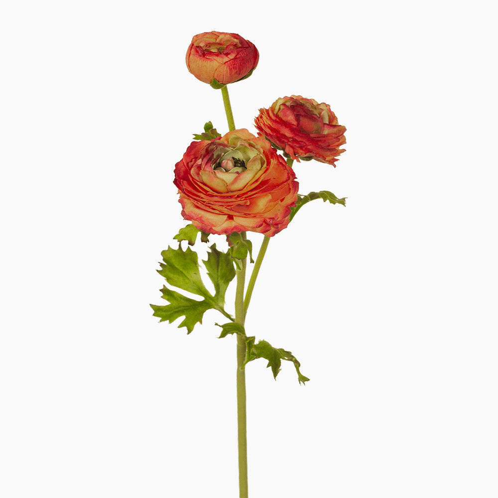 Ranunculus spray (burnt orange)