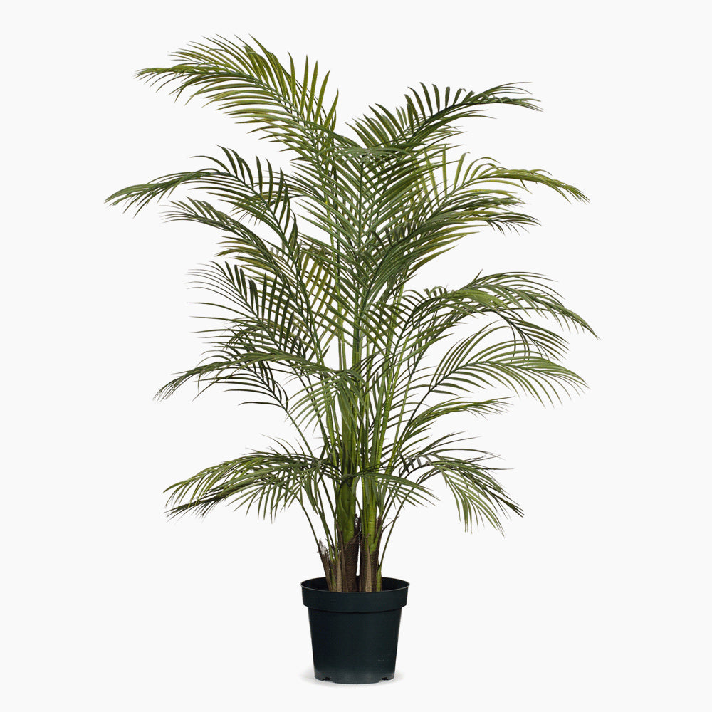 Palm Areca Green (Large)
