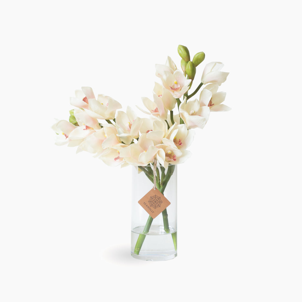 Cream pink cymbidium orchids