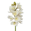Cymbidium (white)