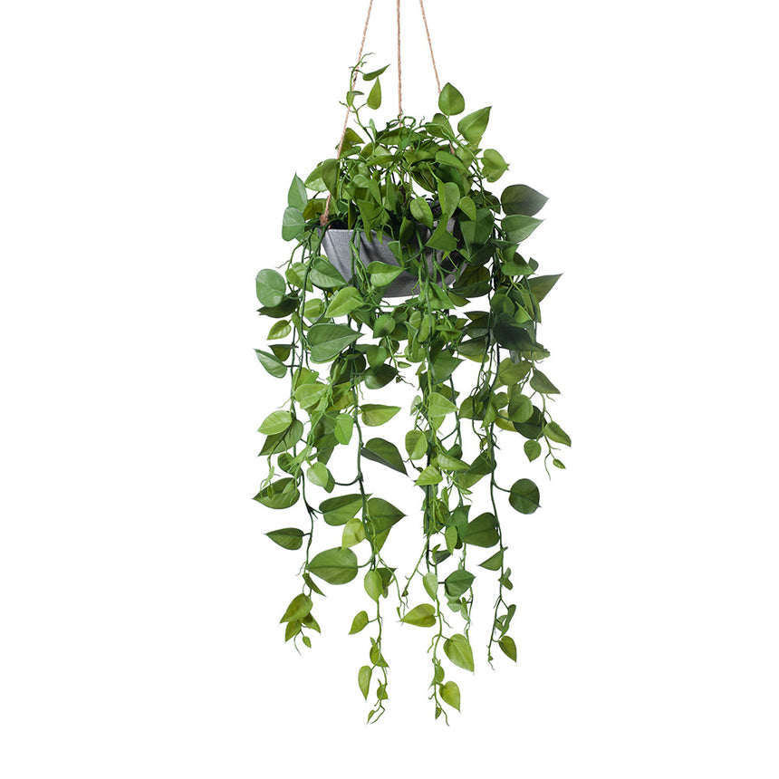 Philodendron Hanging Bowl Green