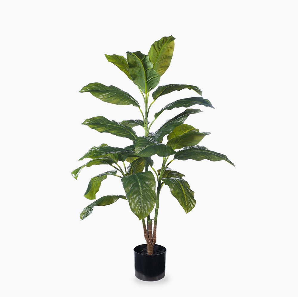 Evergreen Plant (medium)