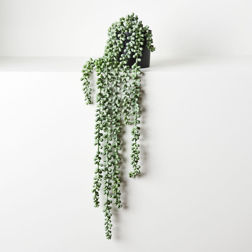 String of pearls in pot (grey/green)