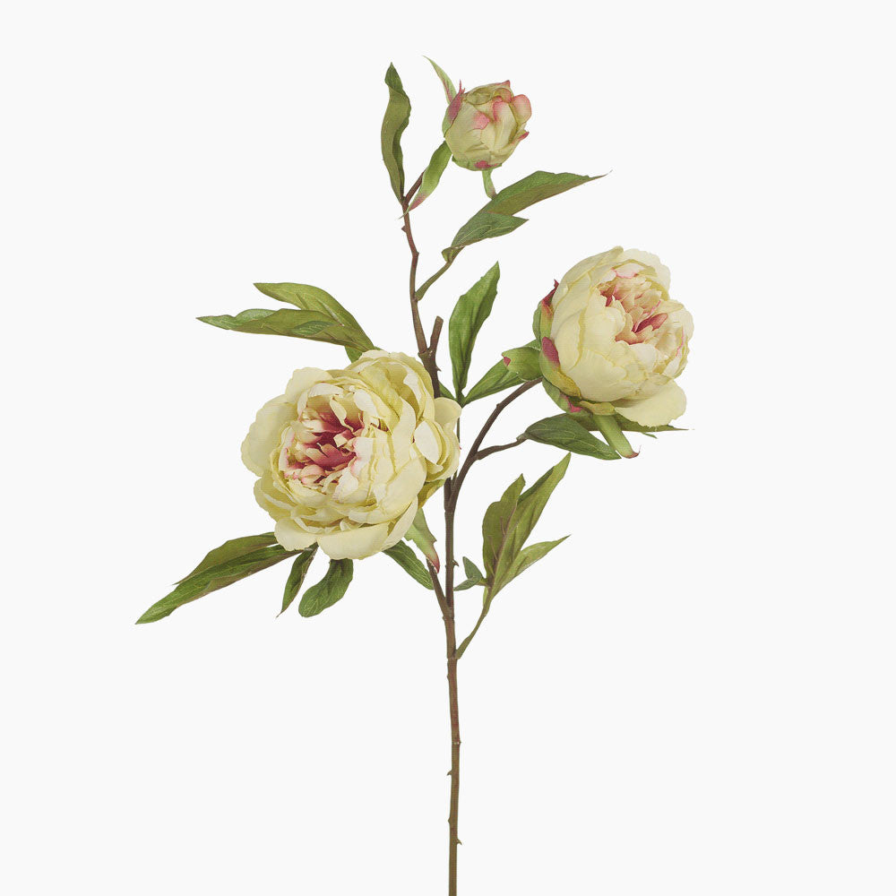 Peony and bud (light green/pink)