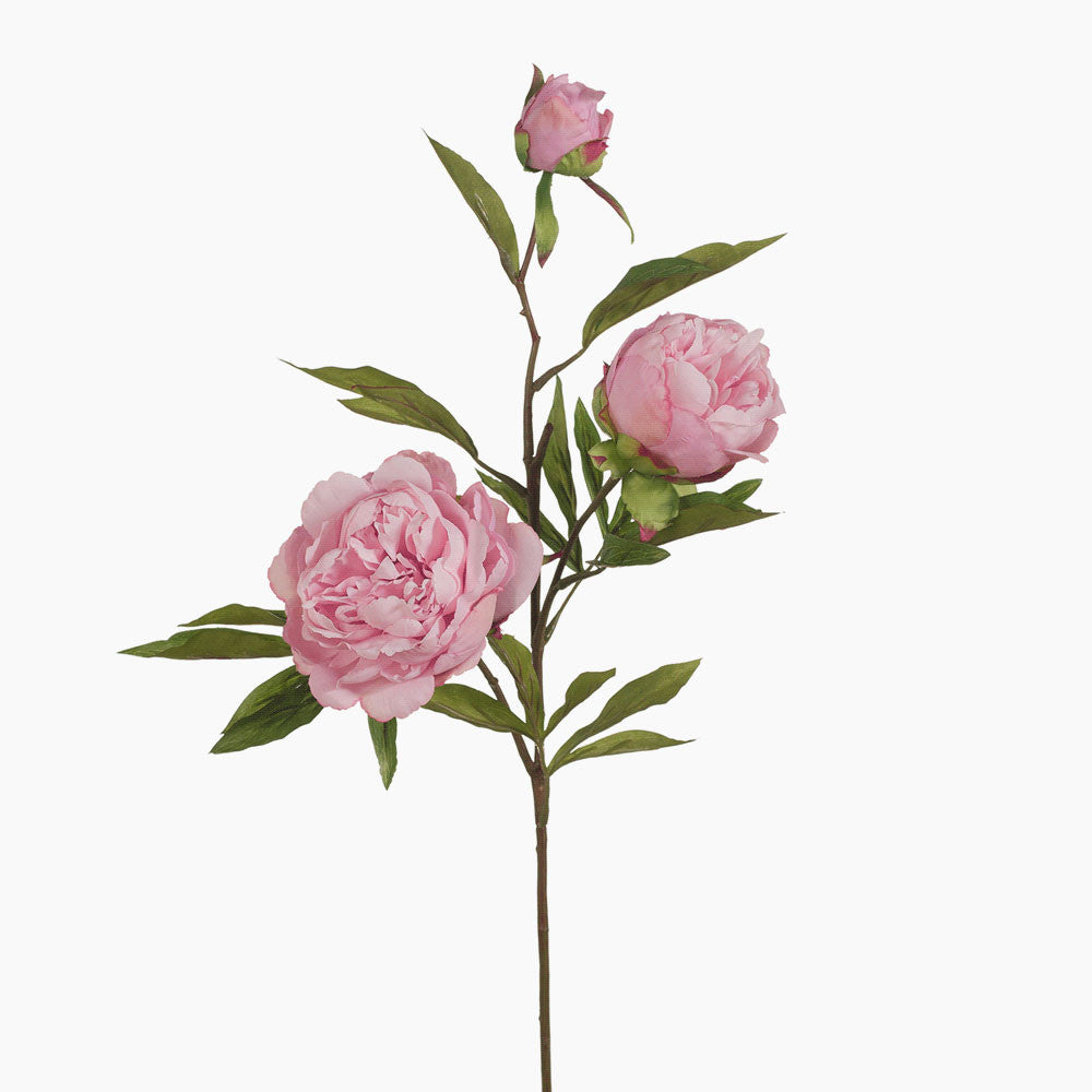 Peony and bud (light pink)