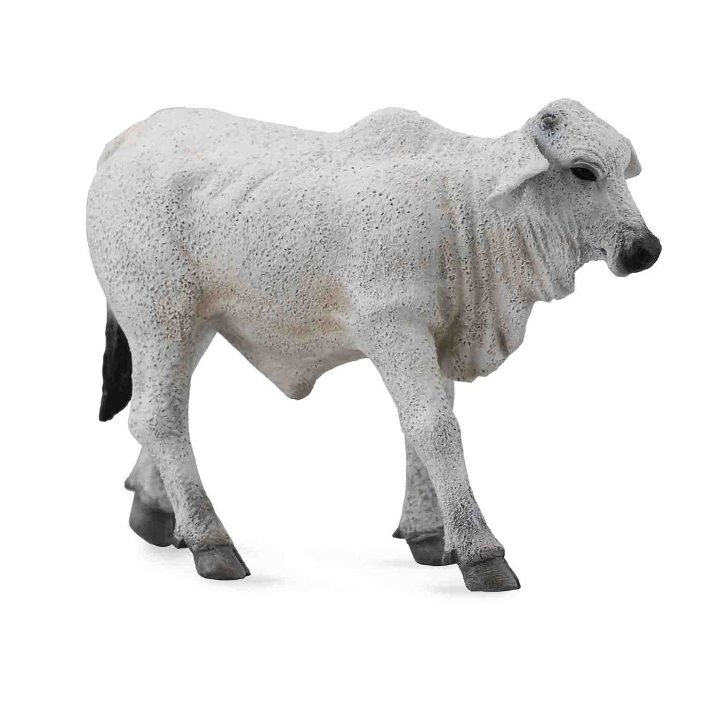 CollectA -  Billy the Brahman Calf Grey - CollectA - The Creative Toy Shop
