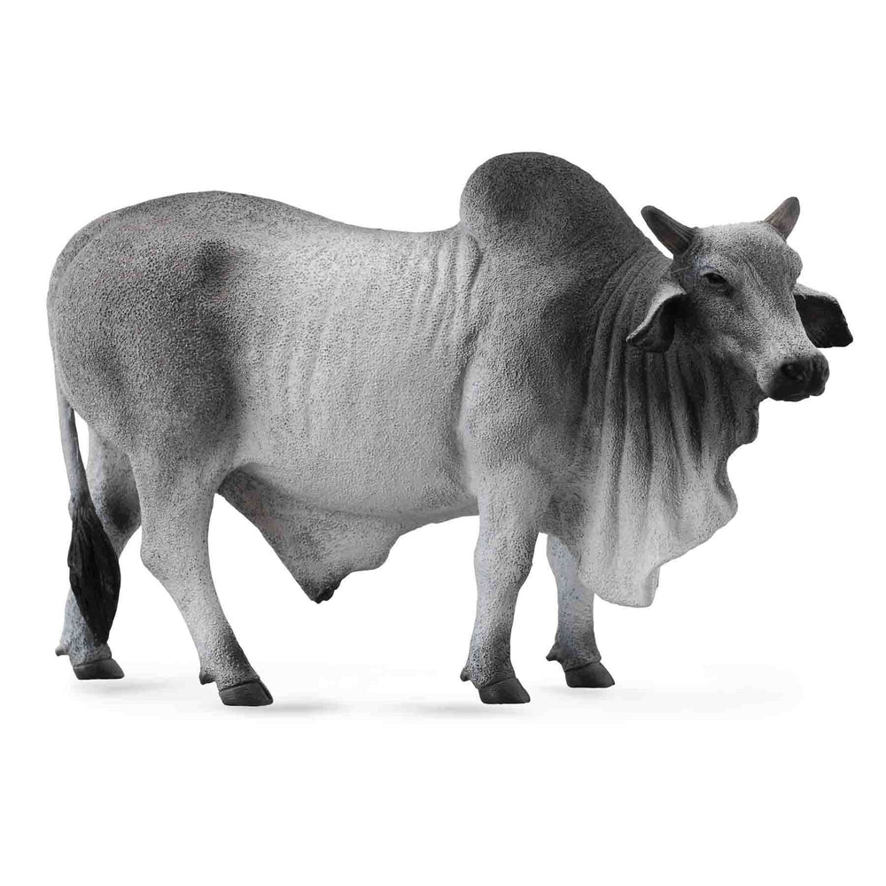 CollectA - Bradley the Brahman Bull Grey-The Creative Toy Shop