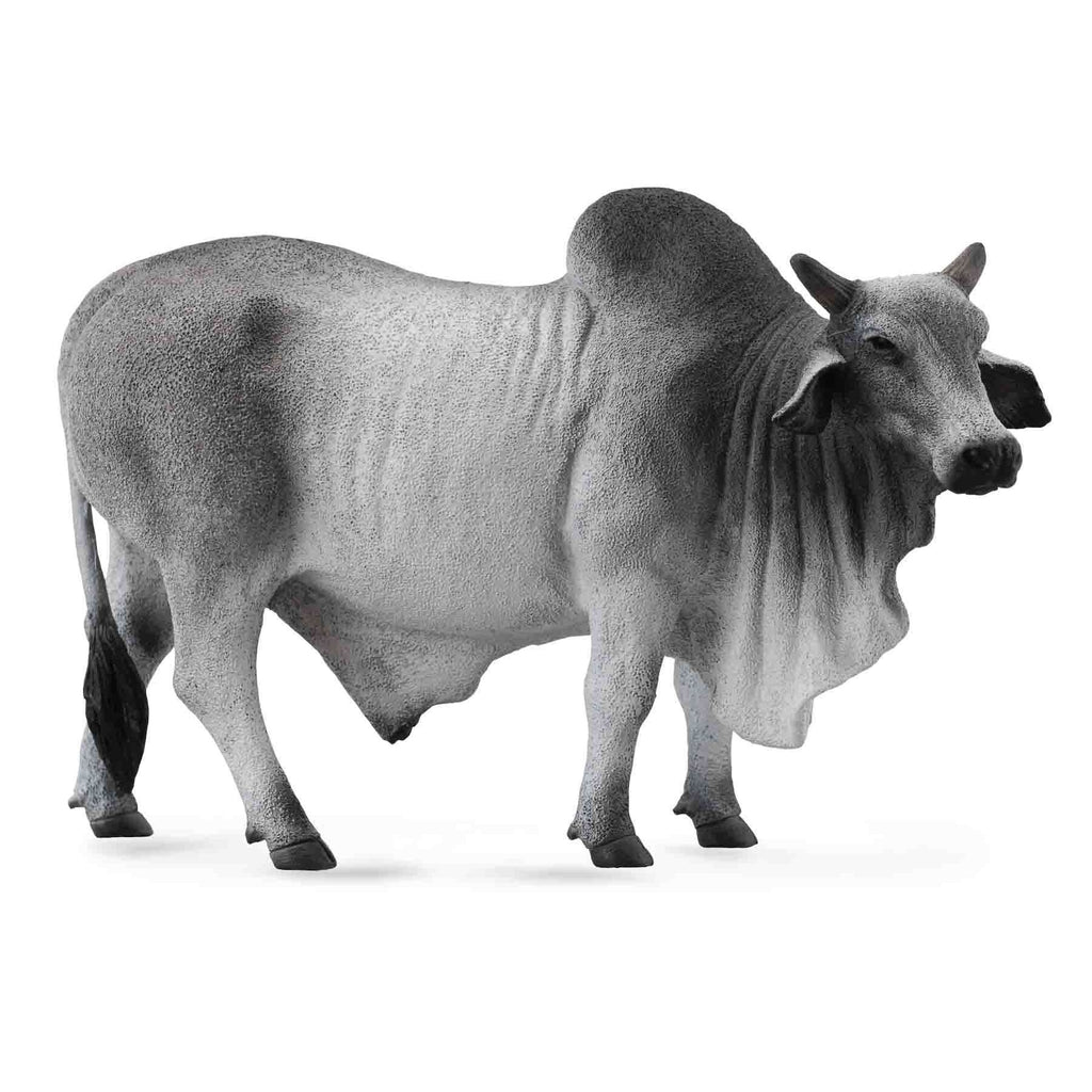 CollectA -  Bradley the Brahman Bull Grey - CollectA - The Creative Toy Shop