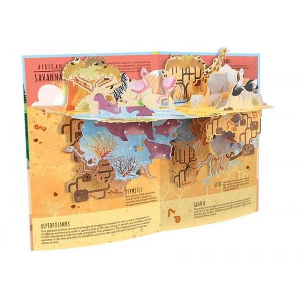 Sassi Above & Below Nature Book-Book-The Creative Toy Shop