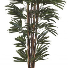 Load image into Gallery viewer, Rhapis Palm 180cm - Magnolia Lane