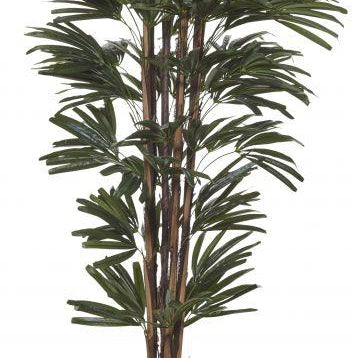 Rhapis Palm 180cm - Magnolia Lane