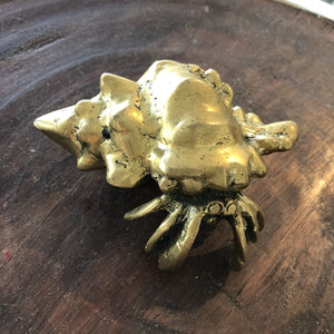 Brass Hermit Crab|Small - Magnolia Lane