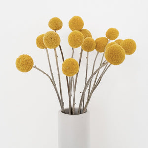 Dried Billy Buttons - Large | Lemon - Magnolia Lane