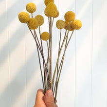 Load image into Gallery viewer, Dried Billy Buttons - Large | Lemon - Magnolia Lane