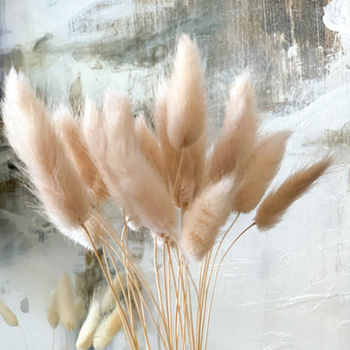 Dried Bunny Tail Grass | Nude - Magnolia Lane