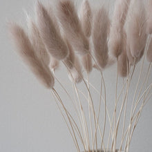 Load image into Gallery viewer, Dried Bunny Tail Grass | Nude - Magnolia Lane