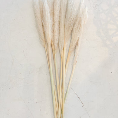 Dried Cortaderia Selloana | Pampas Grass per stem - Magnolia Lane