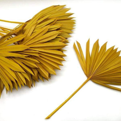 Dried Sun Palm Leaves | Yellow - Magnolia Lane