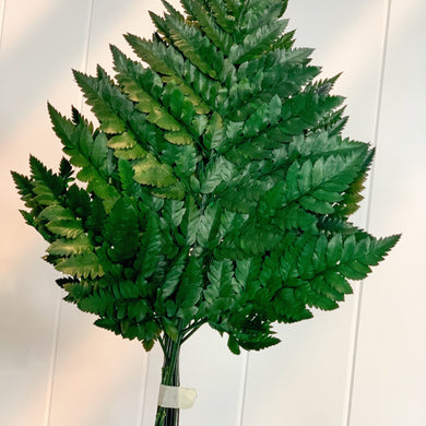 Dried Preserved Leather Fern | Green - Magnolia Lane