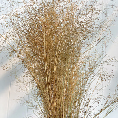 Dried/Lovegrass-Natural | Bunch - Magnolia Lane