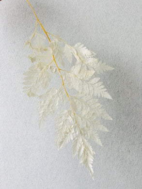 Preserved Leather Fern | White