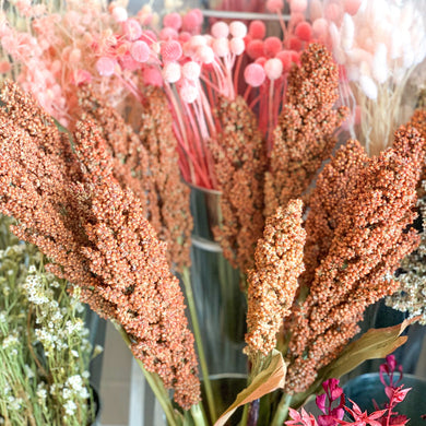 Dried Australian Sorghum | Natural - Magnolia Lane