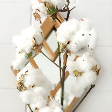 Australian Cotton Stems - Magnolia Lane