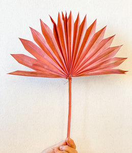 Dried Sun Palm Leaves | Salmon - Dried Flowers - Magnolia Lane